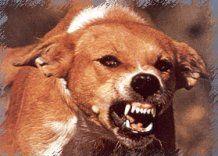 Собаку покусавшую 43 человека, наконец обезвредили
