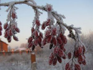 мороз, заморозки погода похолодание