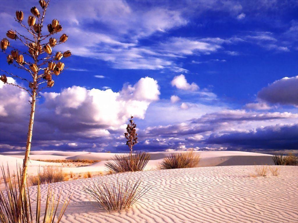 Земля может превратиться в пустыню