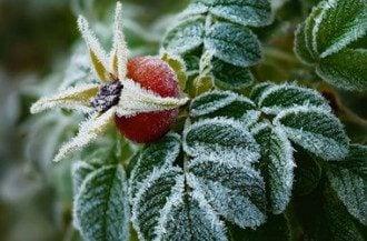 Експерт поділилася, що частині території України вночі загрожують заморозки – Погода заморозки прогноз