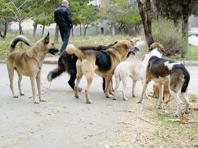 Собаки общаются с друг другом с помощью особого языка