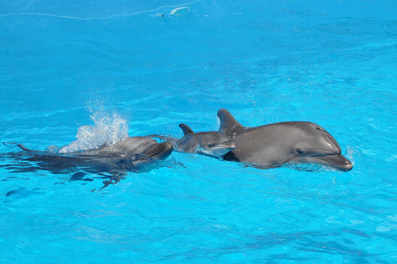 Украину обвинили в уничтожении дельфинов