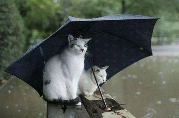 Синоптики прогнозируют дожди на западе Украины