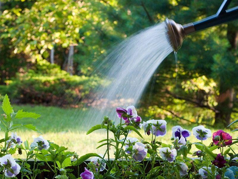 цветы, полив, полив цветов