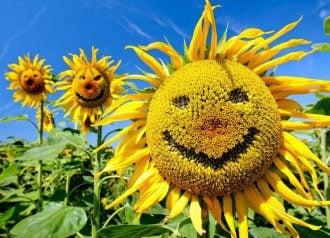4 октября 2019 – праздник улыбки и кому светит богатство в этот день