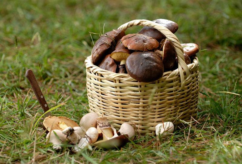 Сколько можно есть грибов — Грибы стоит есть с кашами, с мясом, а также с овощами, сообщила диетолог