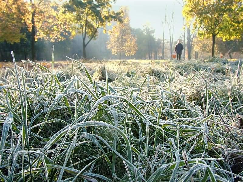 В Украине ночью 30 сентября в ряде областей прогнозируются заморозки, сообщили в Укргидрометцентре