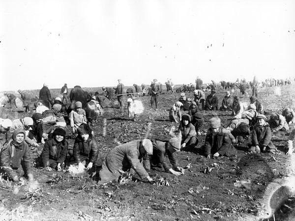 Весной селяне пытались найти на огородах хоть какие-то остатки прошлогоднего урожая