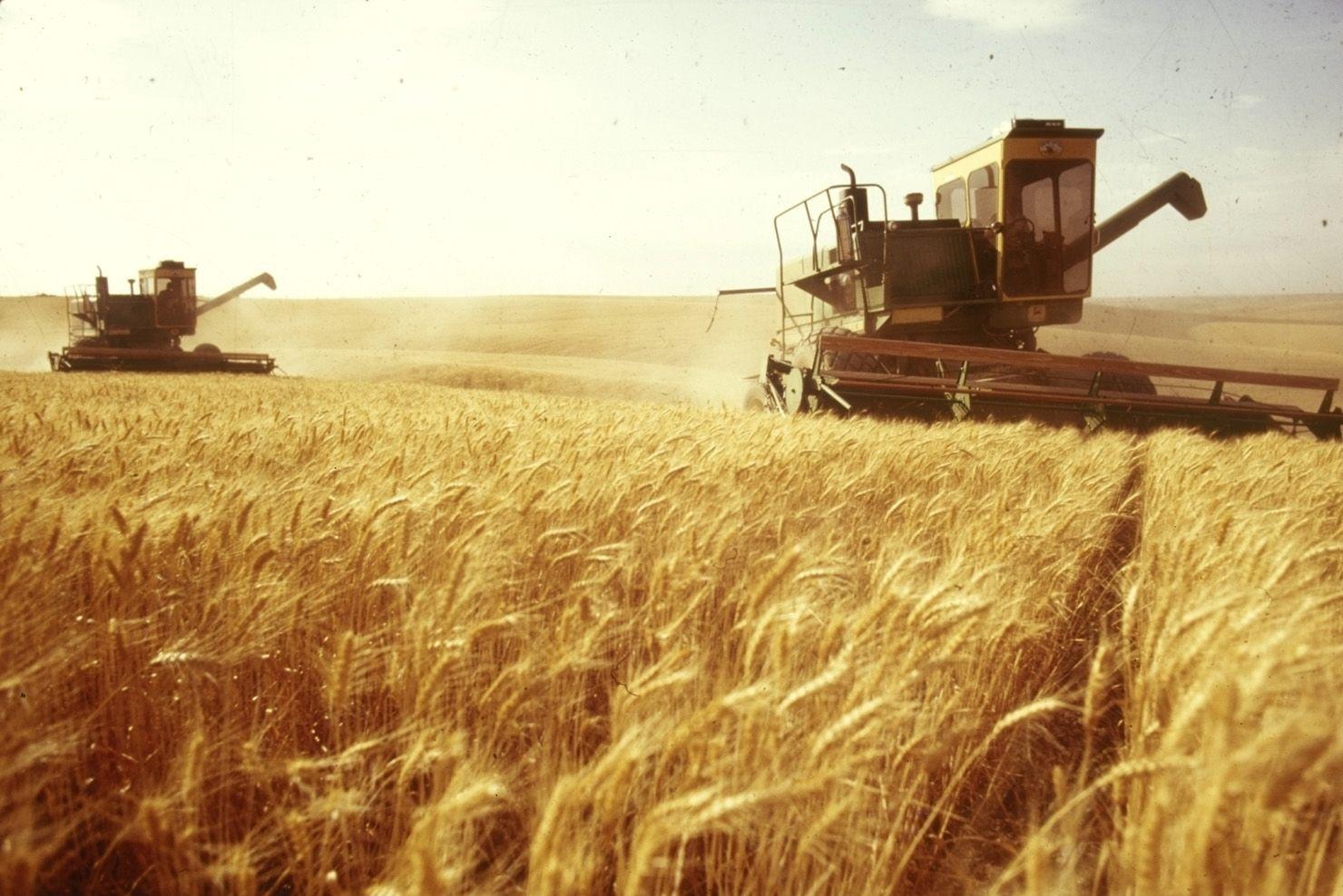 Украина вытесняет Россию на мировом рынке зерна