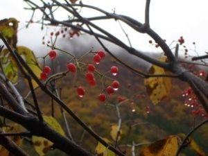 В Укргидрометцентре сообщили, что в Киеве 1 и 2 октября не ожидаются дожди
