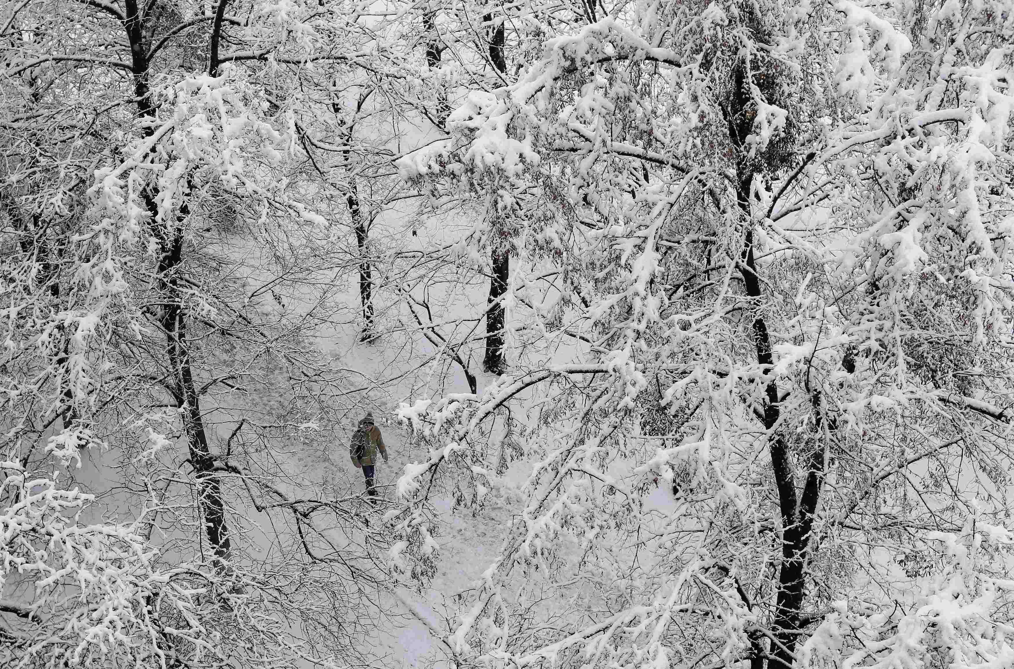Деревья в снегу, иллюстрация