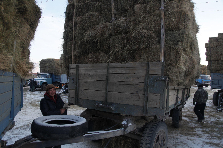 Монгольские фермеры грузят сено, иллюстрация