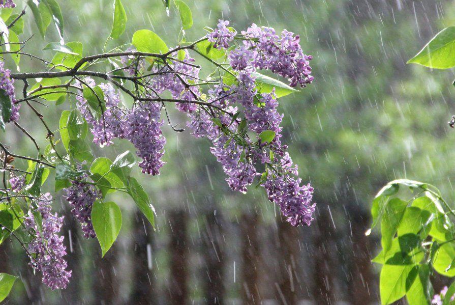 весна, дощ