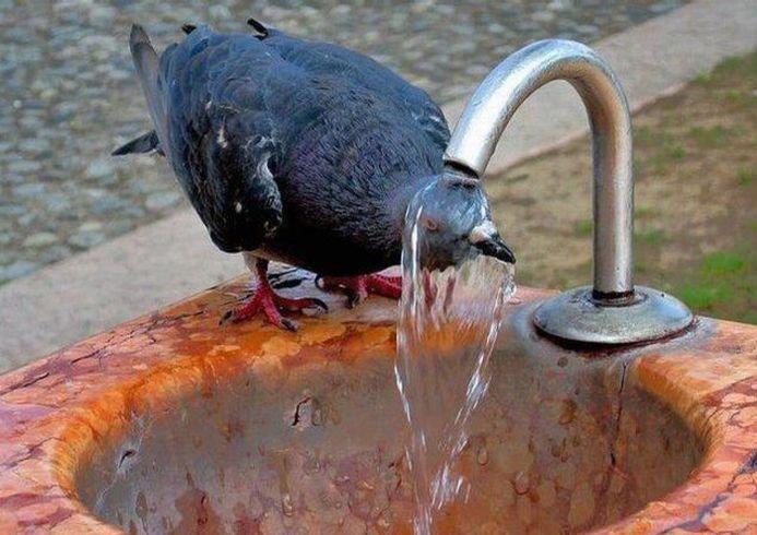 Пить воду с бюветов опасно