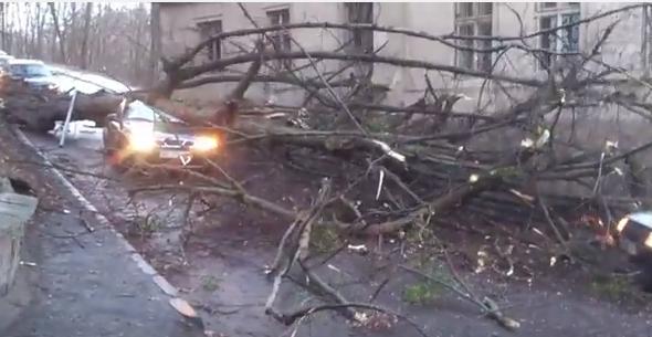 Во Львове дерево упало на такси