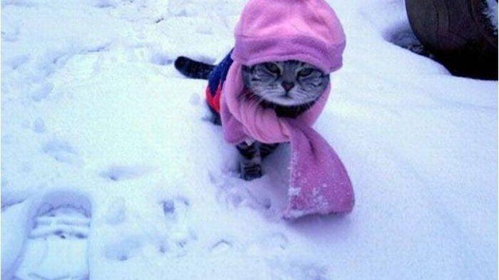 Кот на снегу, иллюстрация