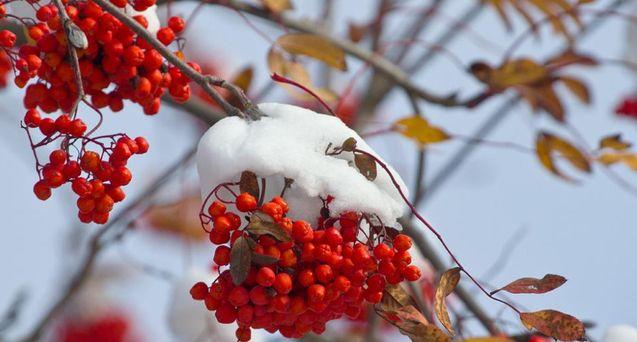 Народный синоптик предупредил, что в Украине самые сильные морозы этой зимы будут в феврале