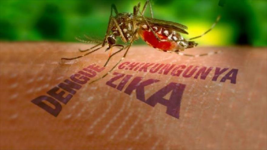 Вірус Зика, комар