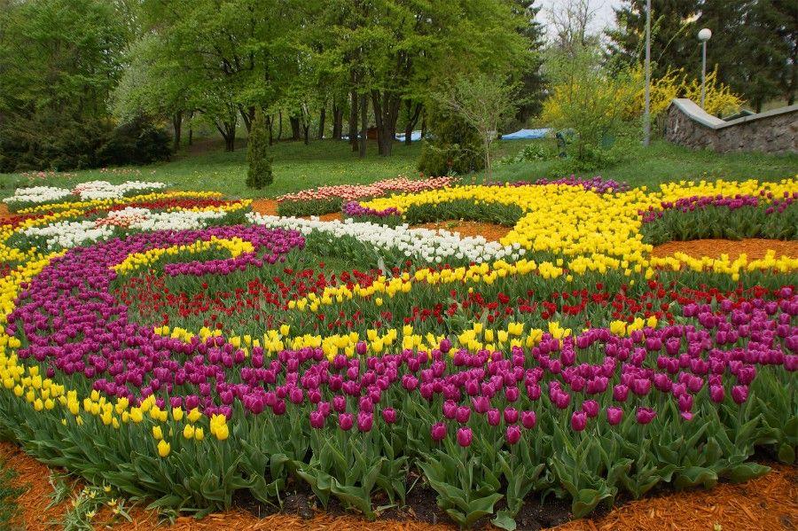 Тюльпаны, иллюстрация