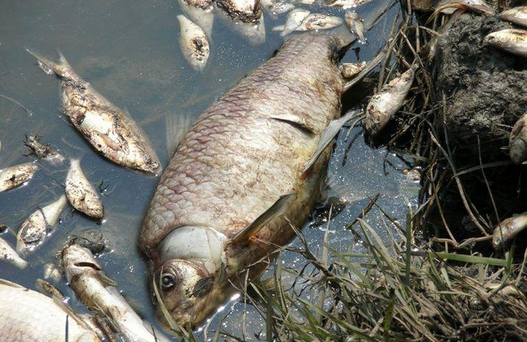 Мертва рыба