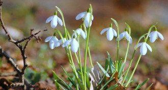 погода, весна
