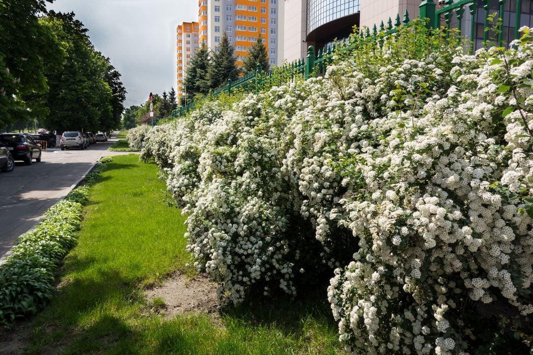 Весна в Киеве, иллюстрация