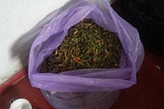 На Днепропетровщине накрыли банду наркодельцов