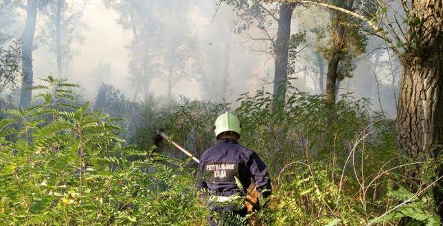 На Трухановом острове горит более 1,5 гектаров травы
