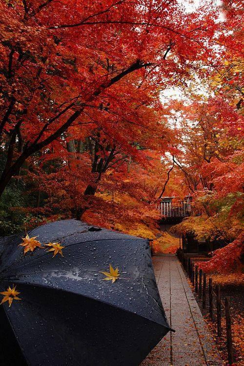 Осень, иллюстрация