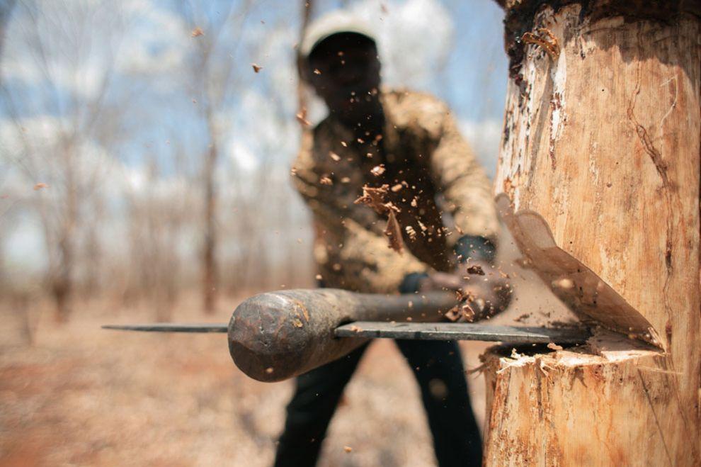 Чиновники зарабатывают на продаже леса, подчеркнул Борейко