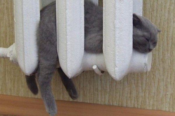 Кот греется в батарее