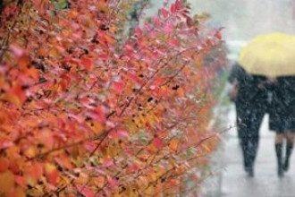 Диетолог посоветовала, что осенью для борьбы с хандрой нужно, в частности, употреблять белки