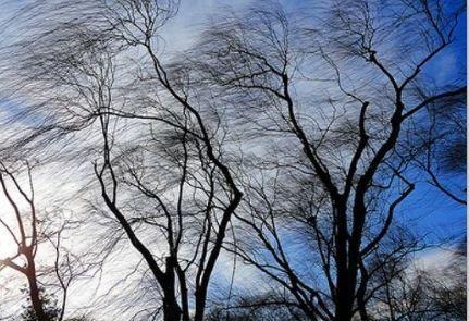 Завтра ожидаются порывы ветра до 25 м/с