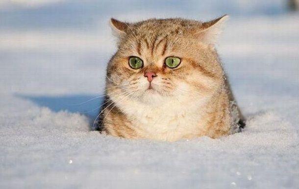 Зачем коту усы?