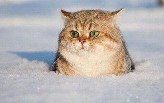 Кот в снегу, иллюстрация