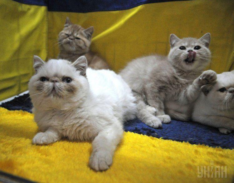 Выставка котов в Киеве.