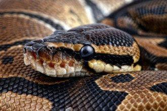 Змії зазвичай символізують страх або трансформацію