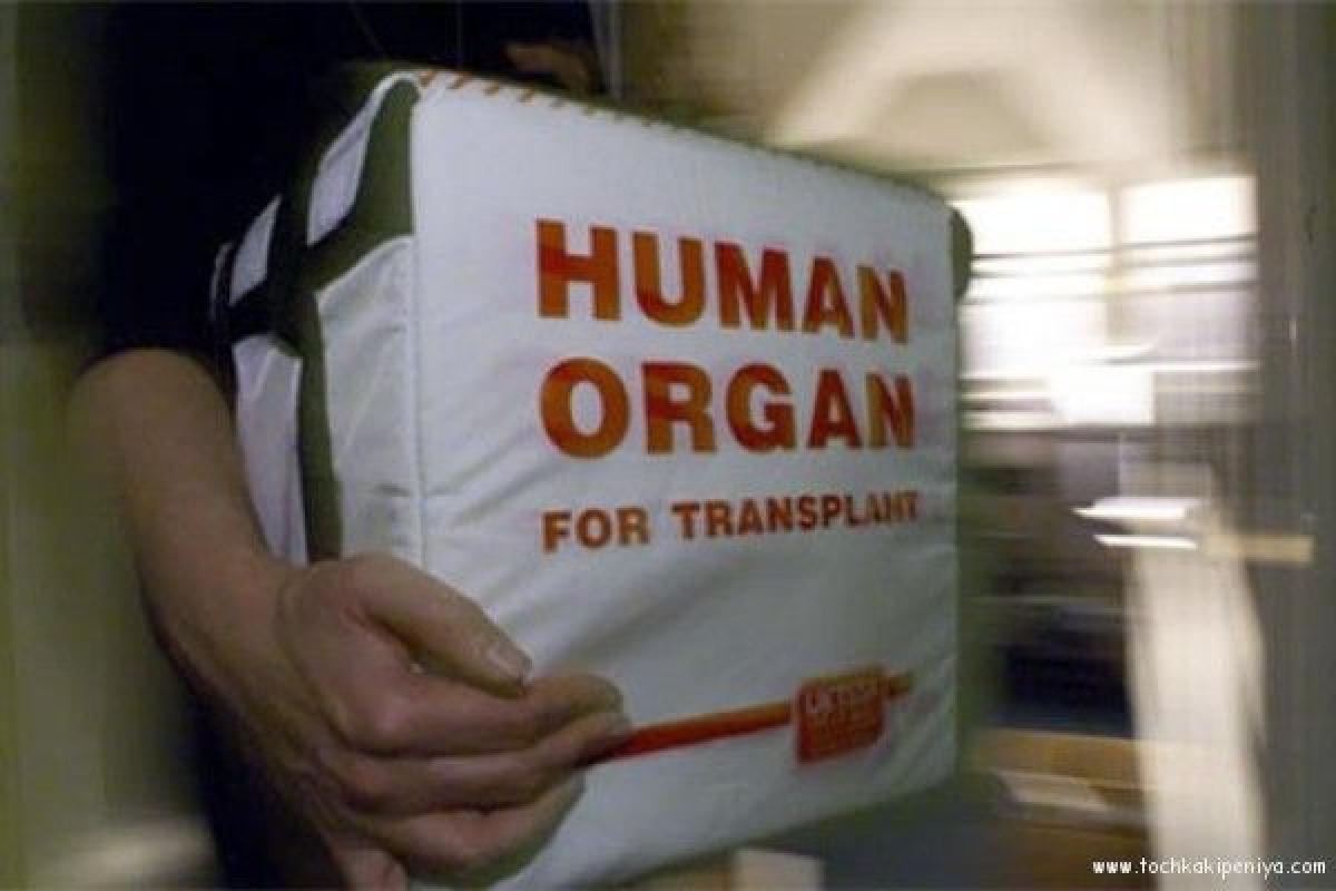 Органы на трансплантацию, иллюстрация