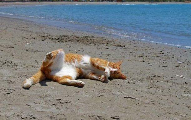Кот на песке, иллюстрация