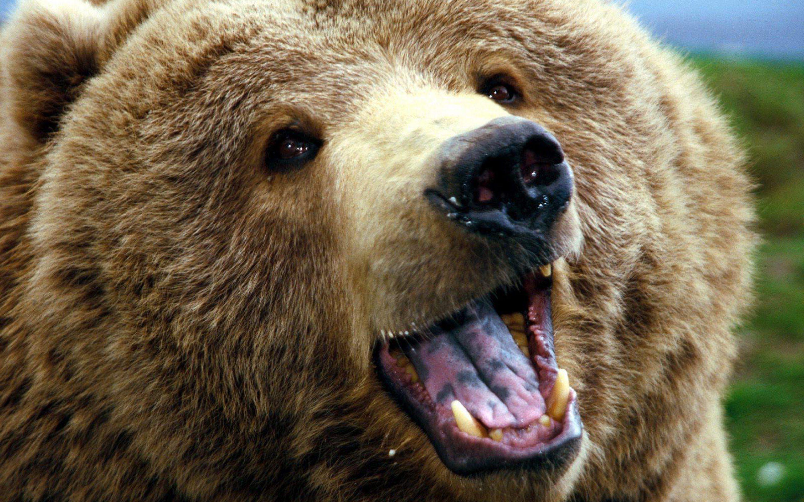 В цирке на Киевщине медведь напал на зрителей
