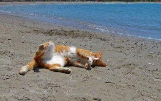 Кот на пляже, иллюстрация