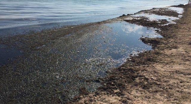 Грязный пляж в Евпатории.