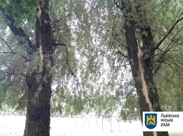 Деревья, поврежденные молнией