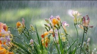 Дощ, погода, літо