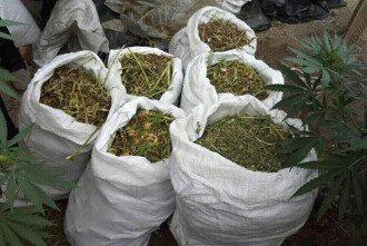 На Херсонщине накрыли банду наркоторговцев