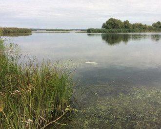 Останки жертвы были обнаружены в озере