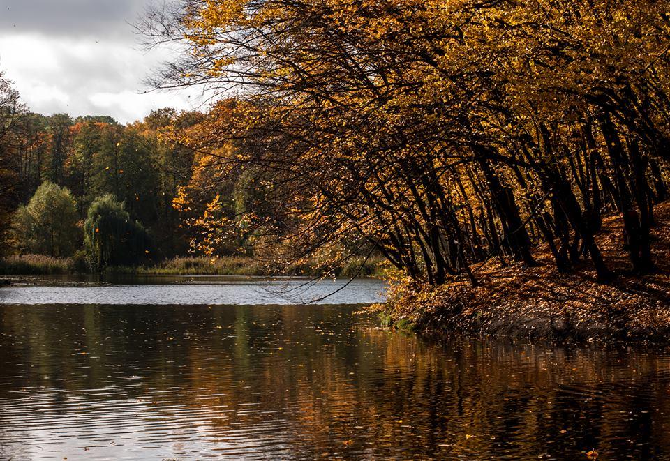 Киев, осень, голосеево