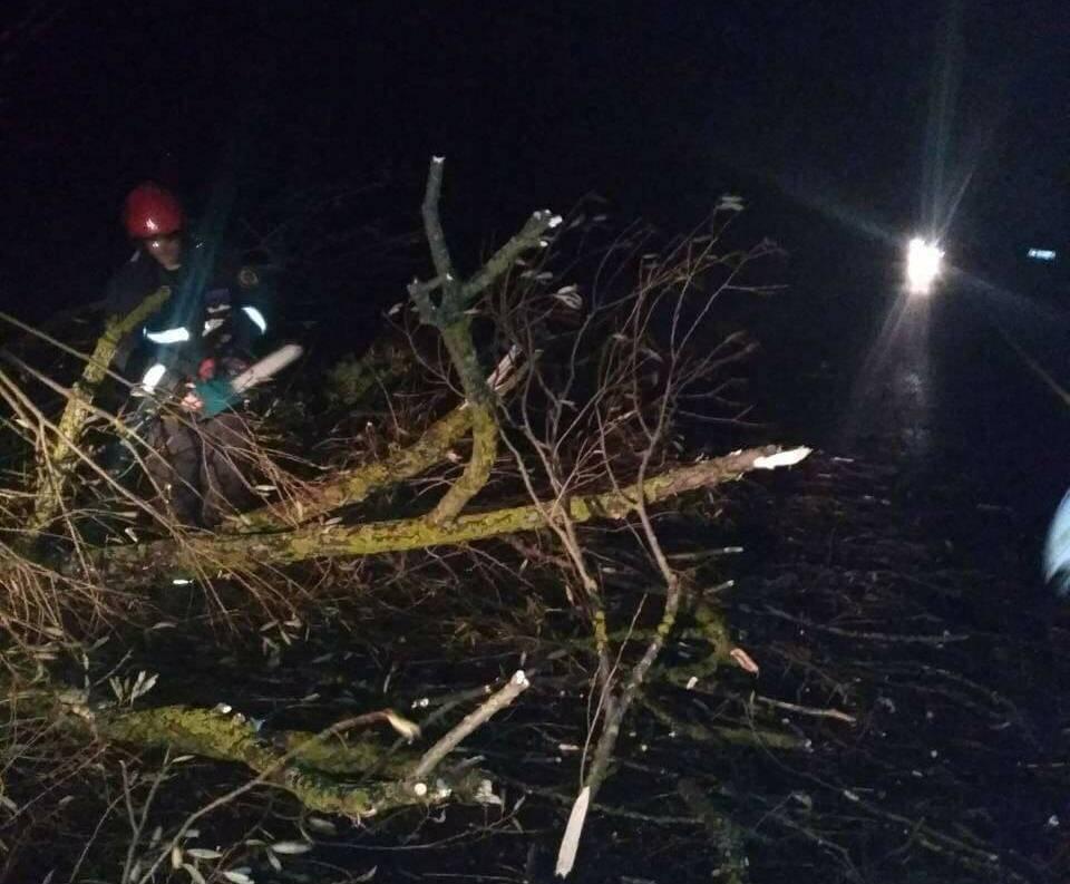 Погода в Украине — В Украине из-за непогоды были повалены десятки деревьев и подтоплены дома, сообщили спасатели