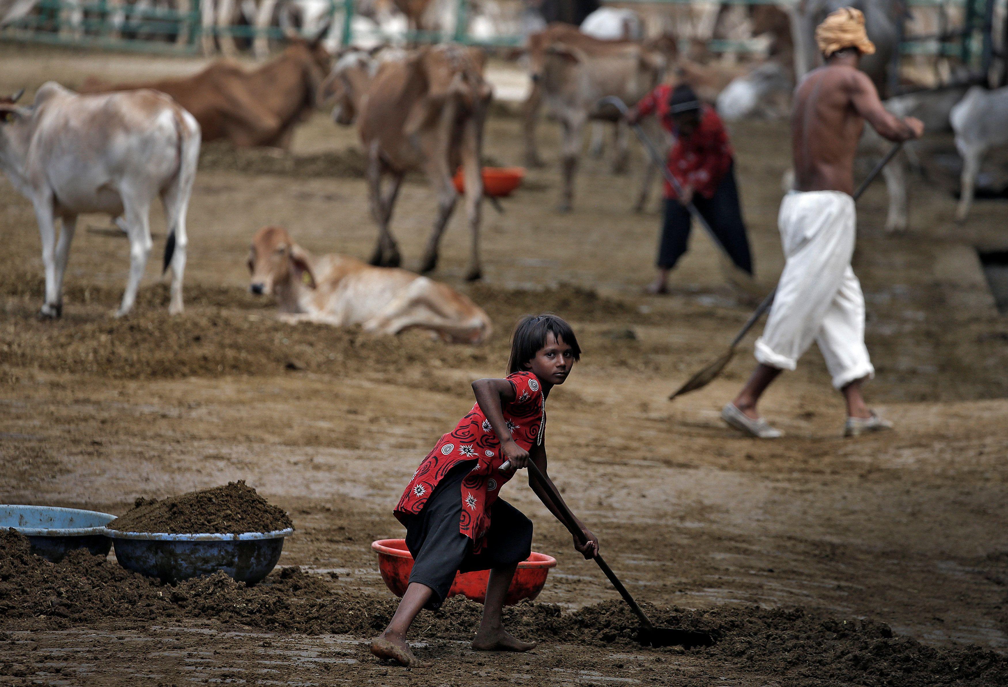 Люди чистят навоз в Индии, иллюстрация