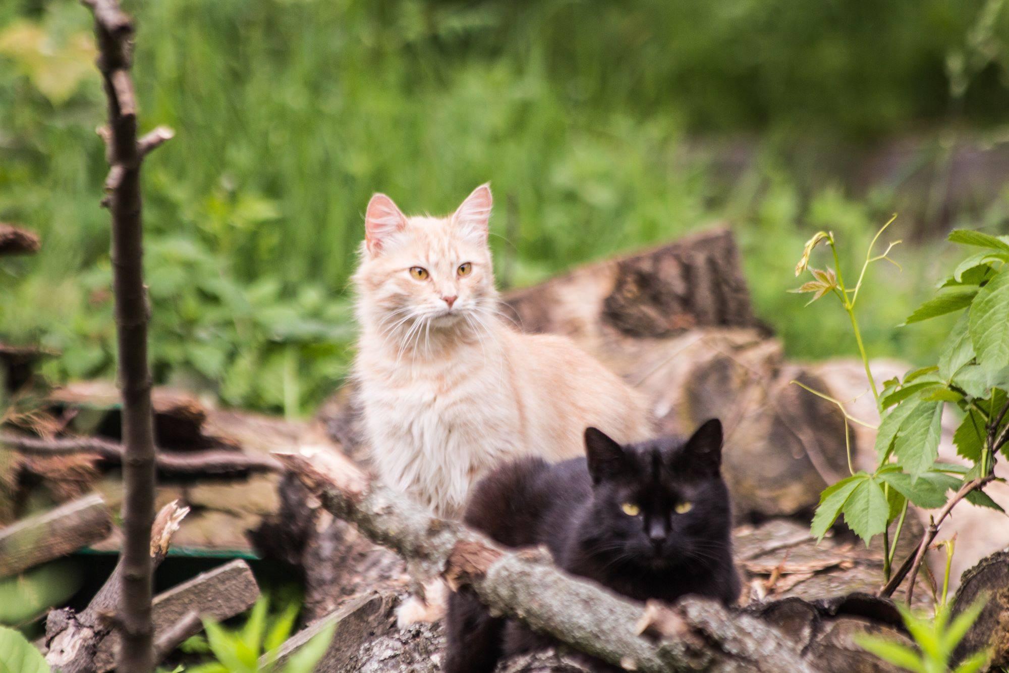 Коты в Киевском зоопарке